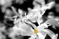 webPF-Petals