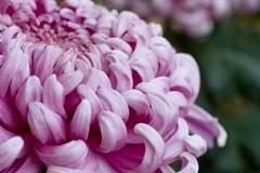 Web_SK_Flower_0873